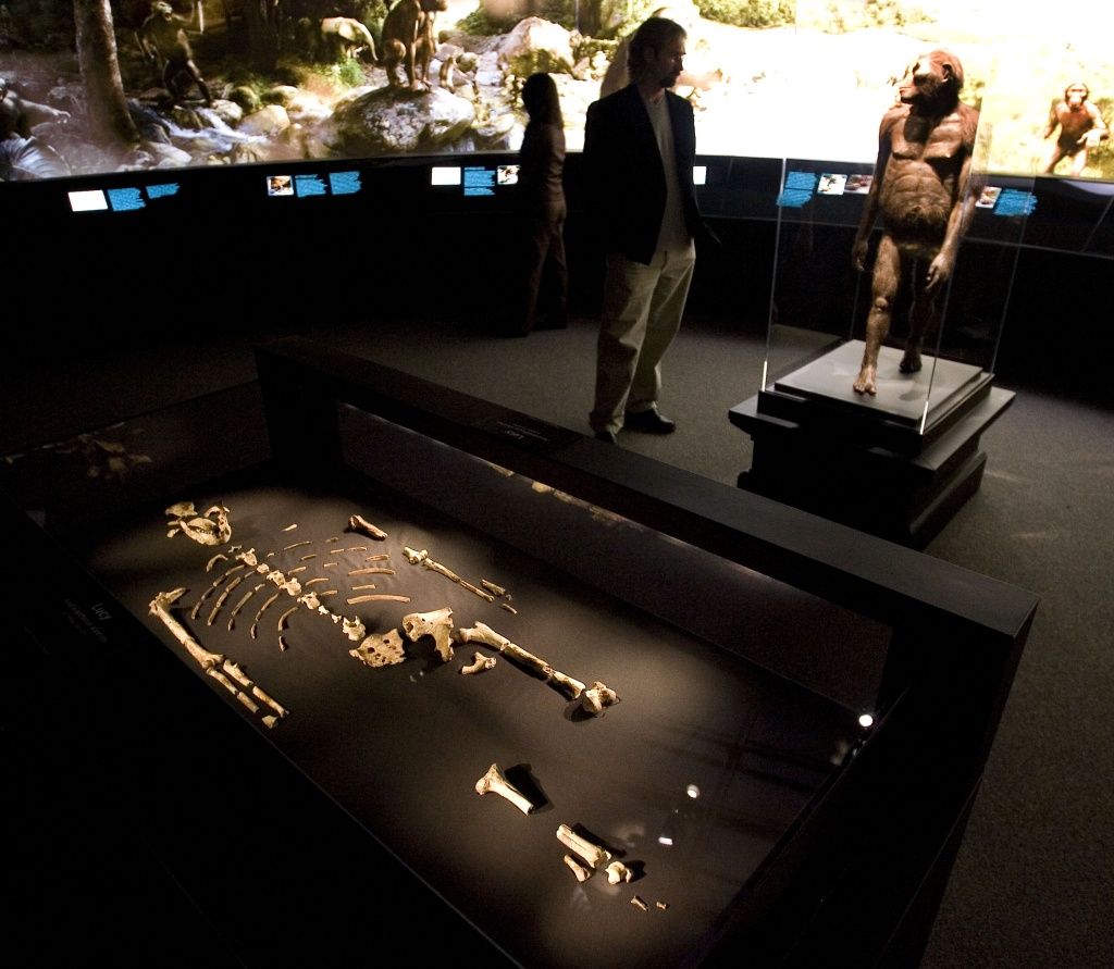 HOUSTON  - AUGUST 28:  The 3.2 million year old fossilized remains of