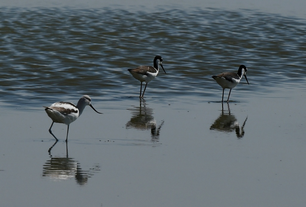Birds are seen next to the North Shore Yacht Club at the Salton Sea, California on March 19, 2015.