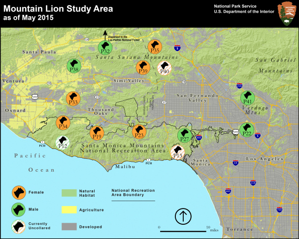 Map of Mountain Lion Study Area