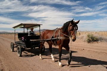 A Mennonite man drives a horse and buggy near Ciudad Cuauhtémoc.