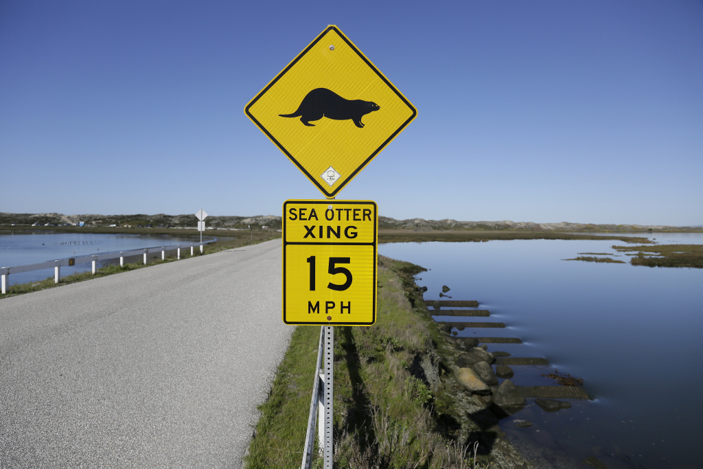 In this photo taken Monday, March 26, 2018, a sign warns motorists of sea otters at the Elkhorn Slough in Moss Landing, Calif.