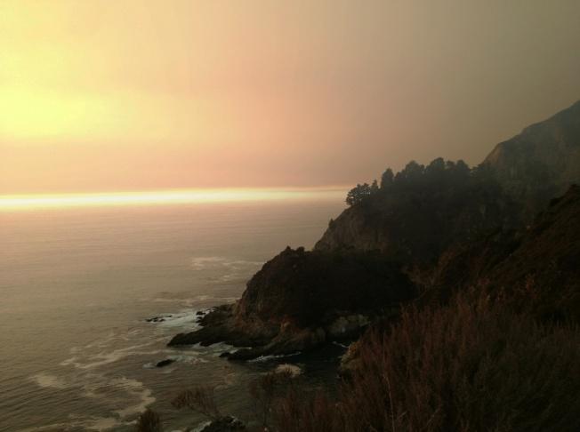 A California redwood amidst ash rain in Big Sur.