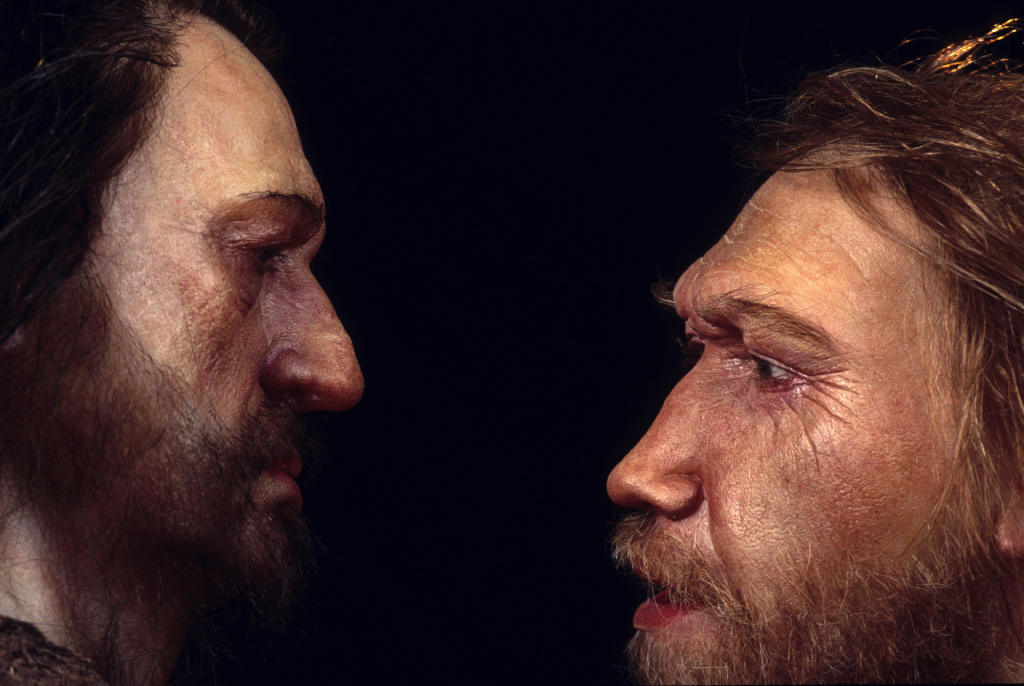 Reconstructions from the Daynès Studio in Paris depict a male Neanderthal (right) face to face with a human, <em>Homo sapiens</em>.