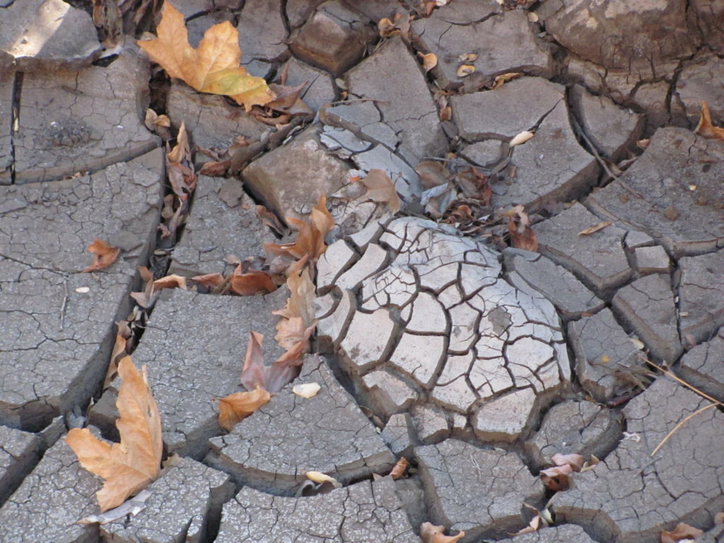 Mud cracks in a drying creek bed.