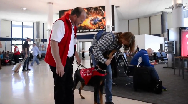 Pets Unstressing People brings therapy dogs to LAX to calm stressed out passengers.
