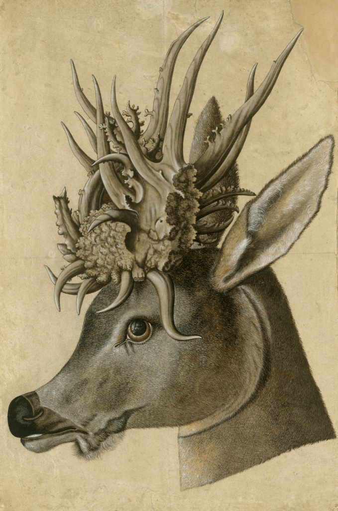 Jörg Ziegler, Head of a Stag with Monstrous Antlers