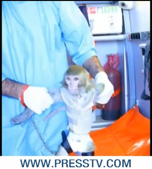 A screen grab from a video produced by Iran's state news agency shows the monkey that the country claimed it successfully launched into space.