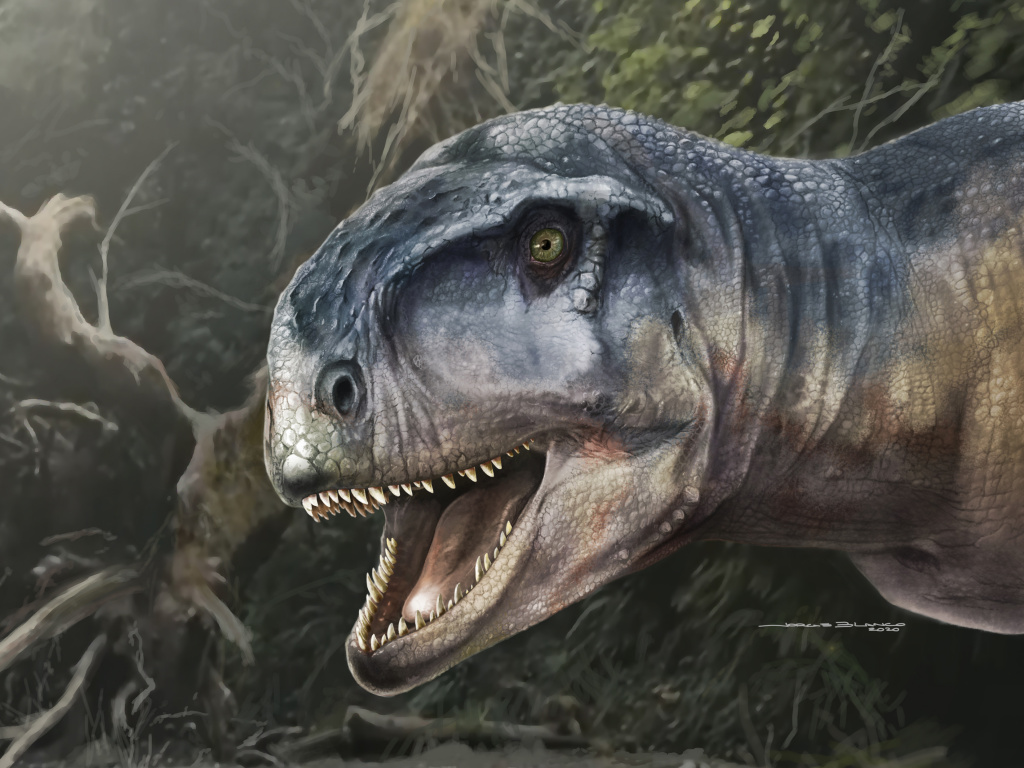 An artist's impression of the Cretaceous Period meat-eating dinosaur Llukalkan aliocranianus that lived about 80 million years ago in the Patagonia region of Argentina is seen in this handout photo.