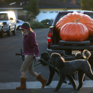 Annual Heavyweight Pumpkin Contest Held In Half Moon Bay