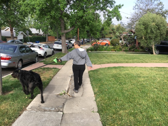 Emily Moore walks her dog on Ridgeview Avenue's broken sidewalks May 15, 2017.