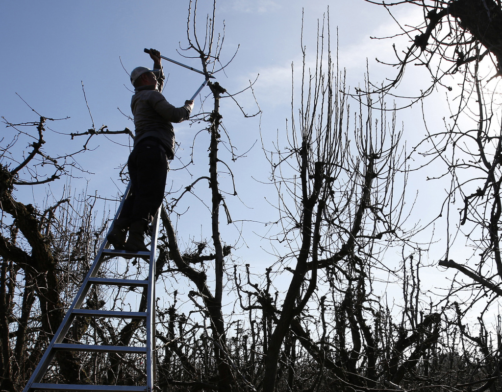 FILE PHOTO: President-elect Donald Trump's tough stance on immigration has farmers in California, the nation's top-producing agriculture state, nervous that they'll have even greater trouble finding workers to tend their fields and orchards.
