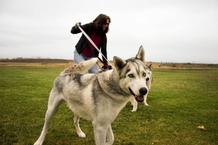 Urban musher Vickie McConathy (right) and her friend with siberian huskies Shadow, Nikki, Tundra and Diva at Talbert Nature Preserve in Costa Mesa, Calif.