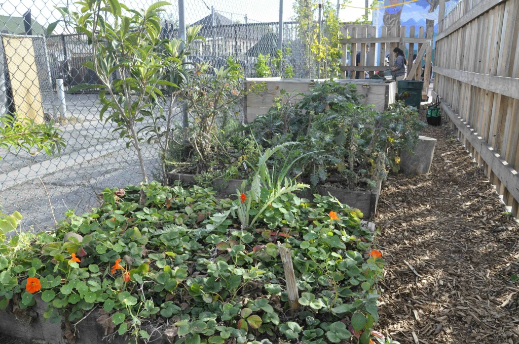 A Place Called Home's community garden in South Los Angeles. A new study says maintaining a community garden plot may also mean maintaining a healthier weight.