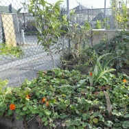 Community Garden (A Place Called Home)