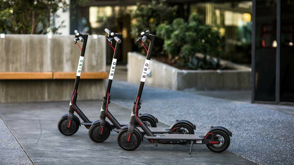 A still of three Bird scooters.