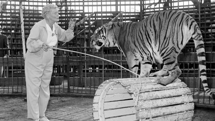Mabel Stark working with one of the tigers in her show.