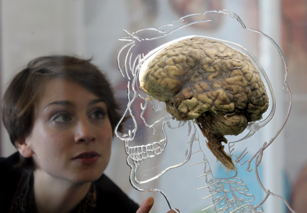 A new study finds that gender plays a big role in how the human brain is hard-wired.
