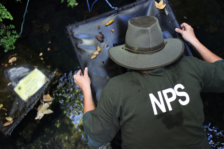 Katy Delaney, a wildlife ecologist with the National Parks Service, feeds red-legged frog tadpoles in an undisclosed location in the Santa Monica Mountains.