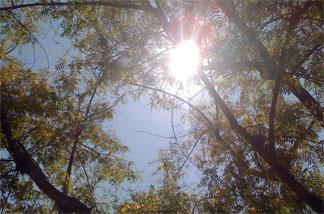 The sun shining over Pasadena Tuesday, July 13, 2010.