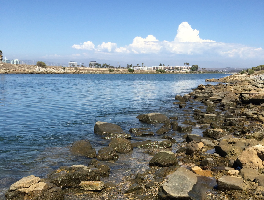 The Ballona Creek estuary, where fresh water meets the Pacific Ocean, forms an important nursery for some fish species.