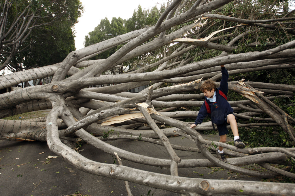 A boy whose school was closed climbs fallen trees on Green Street  after strong Santa Ana Winds that are cauing the worst local wind damage in decades on Dec. 1, 2011 in Pasadena.
