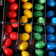 Bavaria's Biggest Coloured Eggs Producer