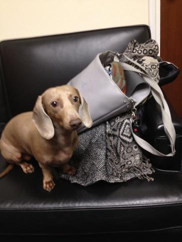Congressman Ken Calvert (R-Riverside) loves his pup, Cali.