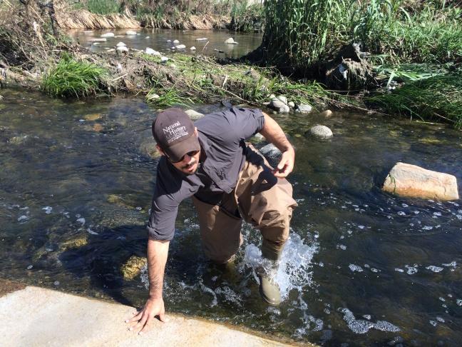 Jim Dines reinstalls a wildlife trail camera along the LA River.