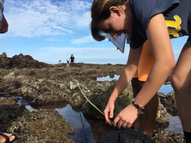 UCLA environmental science student Denita Toneva is using a tape measure to mark the area of tide pool she and her teammates plan to investigate.
