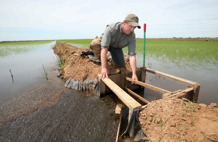 In this photo taken Wednesday, June 2, 2010, rice farmer Michaell Bosworth removes from boards from a small dam to allow water to flow between rice fields in his farm near Olivehurst, Calif. The rice harvest is another victim of California's historic drought, which has sharply reduced crop production as it enters its fourth year.