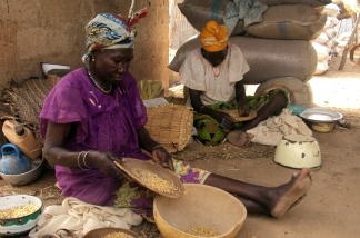 Women sift grains of maize on the Niger border on June 1, 2010; thousands of Niger nationals flooded neighboring Nigeria in search of food as food shortages worsened in the West African country.