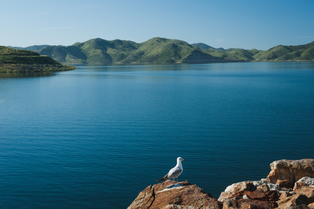 A gull sits on the shore of Diamond Valley Lake in Hemet, California on March 30, 2017. The amount of water in the reservoir, which is fed by snowmelt from the Sierra Nevadas hundreds of miles away, has doubled in the last year.