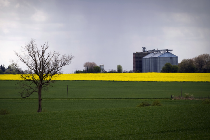 A grain silo is seen next to a rape fiel