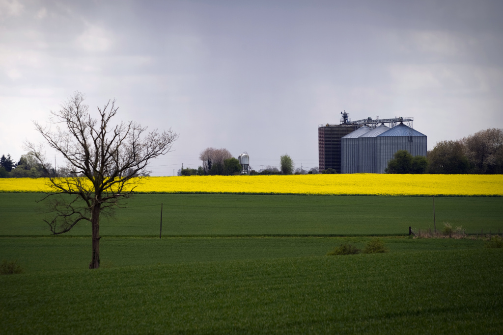 A grain silo is seen next to a rape field in April  19, 2012 in Lieurey, Normandy, west of Paris.