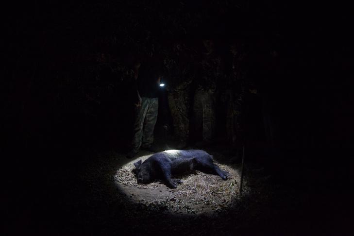 Wild Boar Hunt