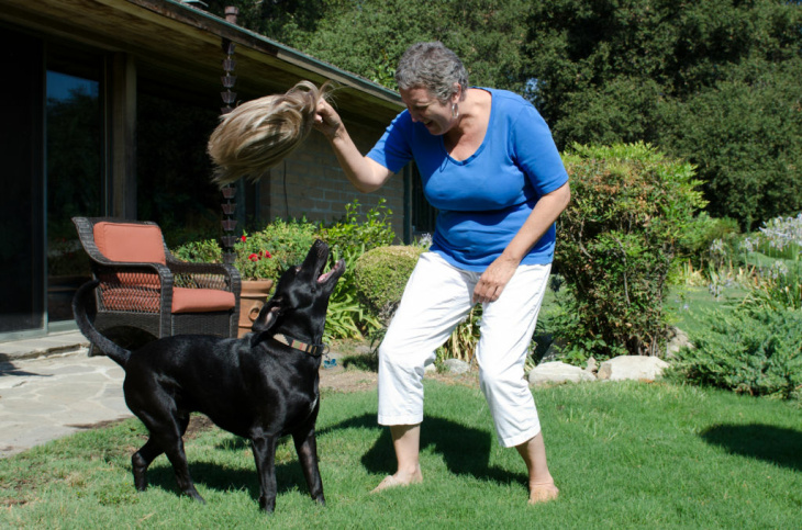 Connie Tucker and her dog, Snookie, play with the wig Connie used when she was undergoing chemotherapy for her cancer.