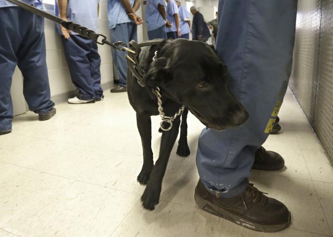 California Prisons Drug Deaths