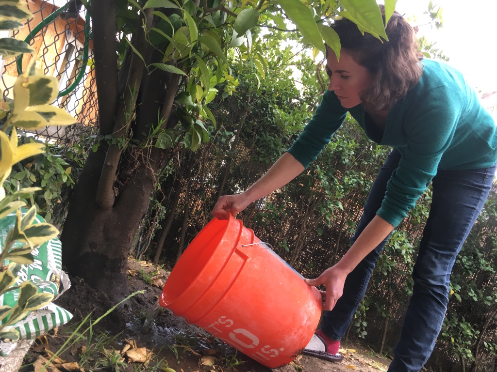 KPCC reporter Emily Guerin empties her shower bucket on the orange tree in her side yard. She no longer uses the bucket now that the drought has been called off.