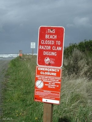 A sign warning beach goers against digging for razor clams along the coast of Washington state.
