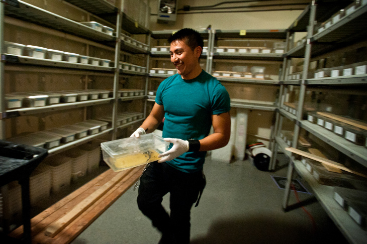 UCLA professor H. Bradley Shaffer holds a Barred Tiger Salamander, nicknamed