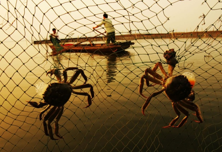 Workers Harvest Crabs In Wuhan