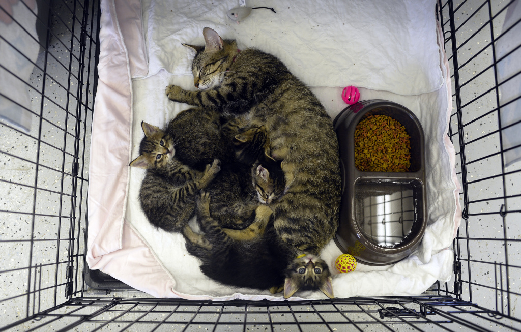 A cat and her kittens rest in a cage at an animal shelter on May 23, 2013 in Moore, Oklahoma.