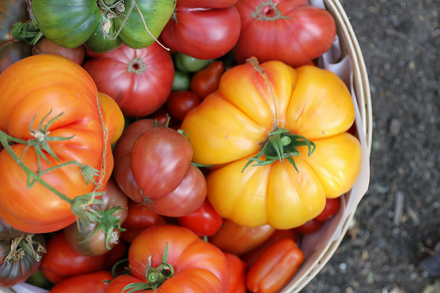 A bowl of heirloom tomatoes.