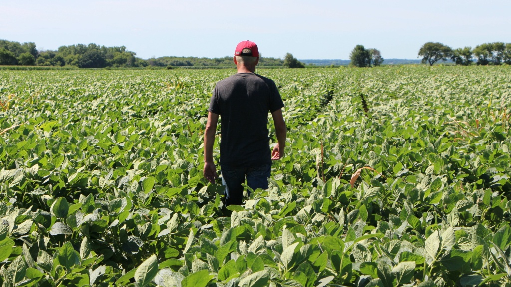 On Sept. 4, the Agriculture Department will accept applications from farmers who produce corn, cotton, dairy, hogs, sorghum, soybeans and wheat — products hit by retaliatory tariffs after the U.S. imposed a levy on $34 billion worth of Chinese imports. Last month, farmer Terry Davidson walked through his soy fields in Harvard, Ill.