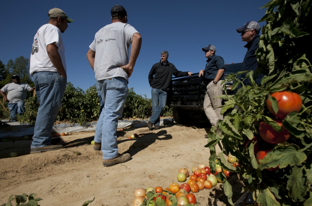 State Sen. Scott Beason, R-Gardendale, center, talks with tomato farmers about the Alabama immigration law on Chandler Mountain in Steele, Ala.  Beason, who helped pen the measure, said he was sticking by the law although he would try and find relief for farmers who rely on migrant workers to harvest their crops. The unrest and concern over the strong new Alabama immigration law made it one of the Top 10 stories of the year for 2011.