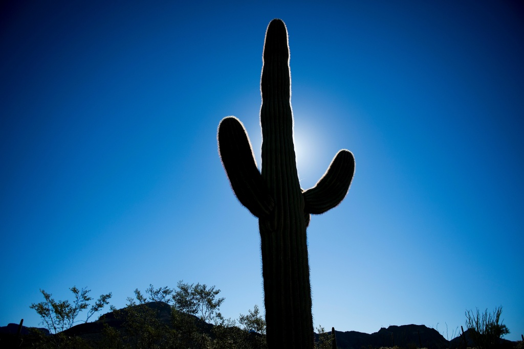 A cactus is silhouetted at Organ Pipe Cactus National Monument near Lukeville, Arizona, on February 16, 2017, near the U.S./Mexico border.