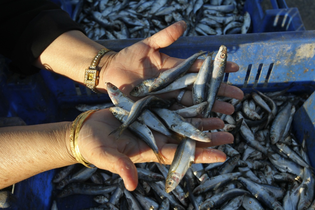 Palestinian fisherwoman shows the fish on sale along the sea front in the Deir al-Balah Palestinian refugee camp, central of Gaza Strip, on September 18, 2012.