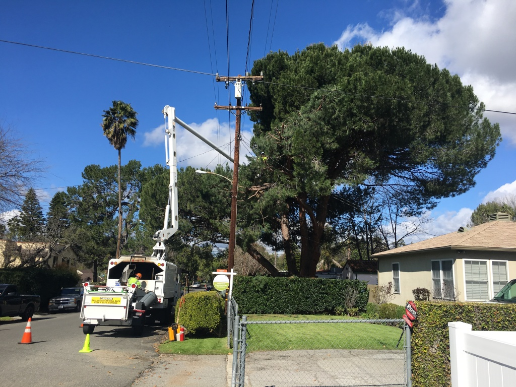 A tree-trimming crew hired by Southern California Edison clears branches from an old pine away from power lines on Sacramento Street in Altadena on March 8, 2019.