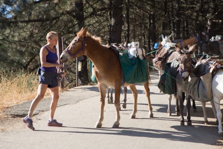 Deb Burgess and her pack of donkeys trek nine miles to deliver supplies on September 5th, 2013.