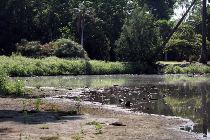 The shoreline in the foreground used to be lake. Baldwin Lake inside the Los Angeles County Arboretum & Botanic Garden in Arcadia on Tuesday morning, Aug. 23, 2016.